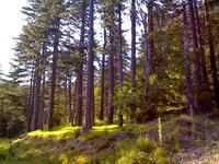 Αετομηλίτσα-δάση