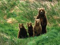 Αρκούδες Αετομηλίτσα